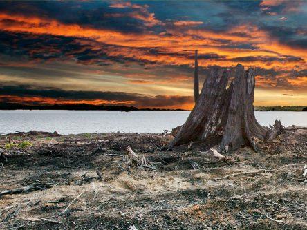 Count–Down<br> am Xingu V Titlebild
